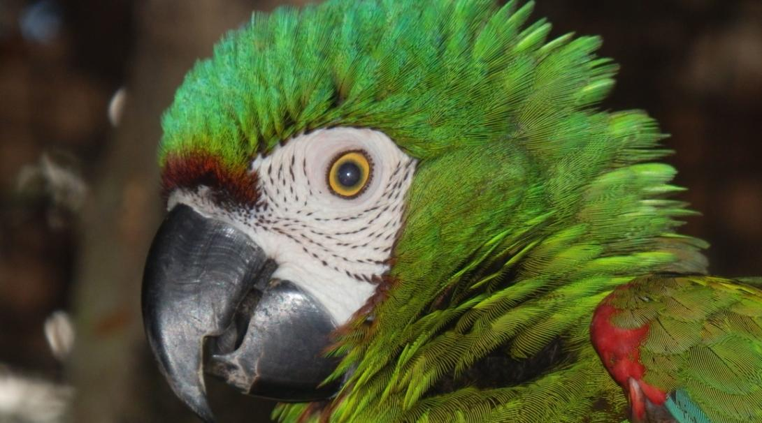 Save the Amazon rainforest in Peru.